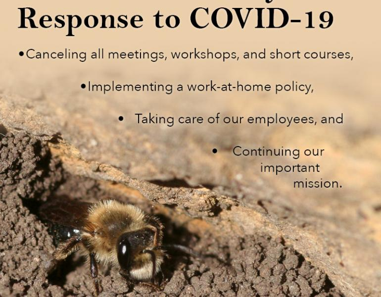 "In this graphic, a bee peeks out of a hole in loose dirt. The text says, ""The Xerces Society's Response to COVID-19,"" and lists the points outlined in this blog post."