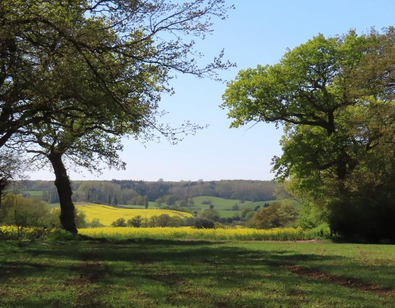 The English countryside is a patchwork of woodlands and farm fields edged by hedgerows.