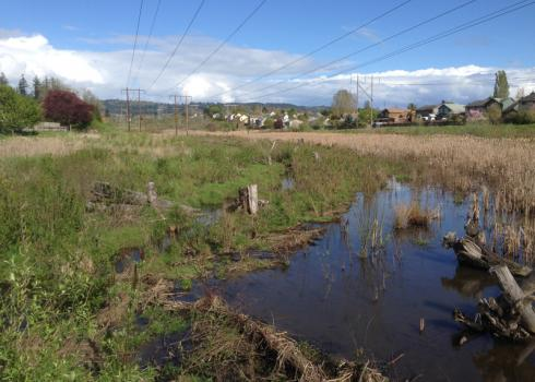 A marsh that is reflecting the deep blue of the sky is ringed by powerlines and neighborhoods.