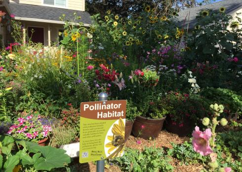 A beautiful, colorful garden bursts with a variety of blooms. In the background, a partially obscured, brightly-painted house stands. In the foreground is a Xerces Society pollinator habitat sign.