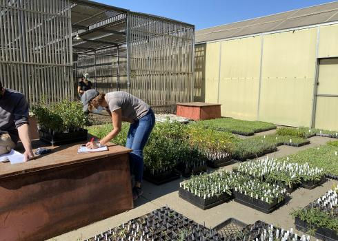 Plant trays containing thousands of seedlings are laid out on the ground.