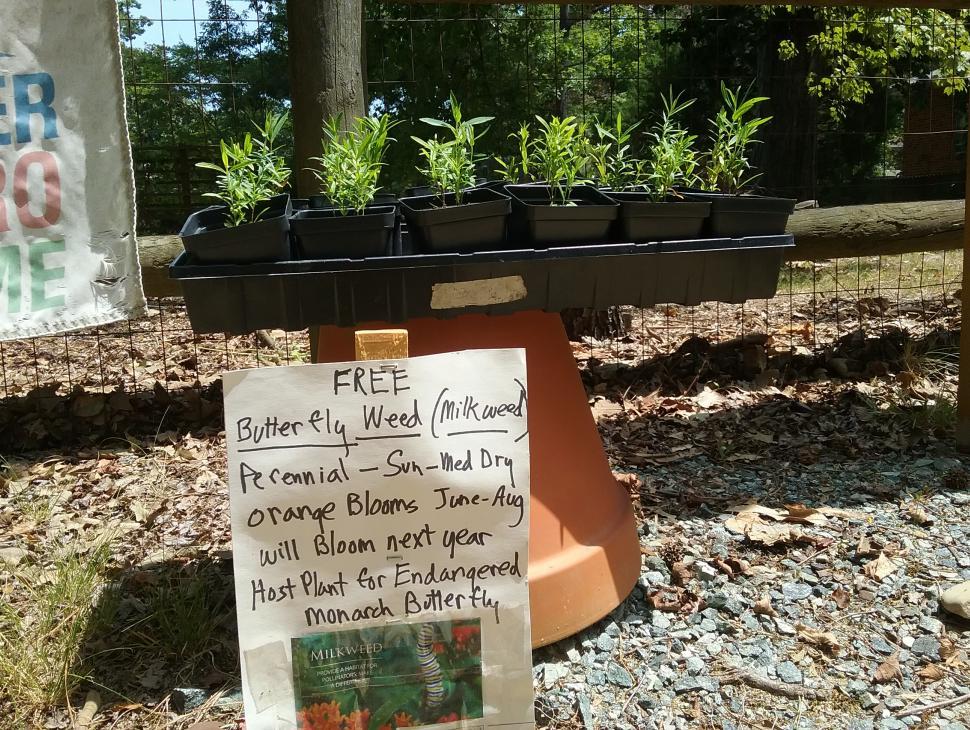 Free native milkweed and nectar plants