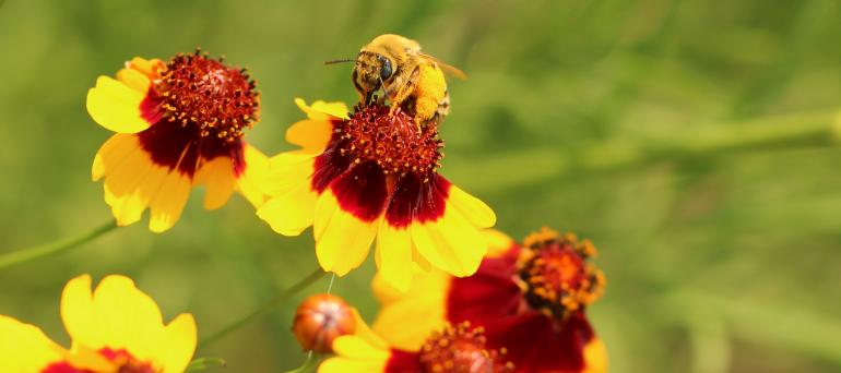 Pollinator Conservation - Xerces Society